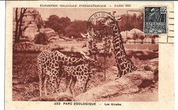 CPSM En PF  De PARIS  (75) - Exposition Coloniale Internationale De Paris 1931 - Parc Zoologique - Les GIRAFES   //  TBE - Giraffes