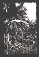 Puissante Végétation Africaine - Cartes Postales