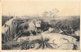 Galeries Du Duc D'Orléans - Hippopotame  Et Crocodiles - Carte B1 Non Circulée - Hippopotames