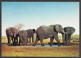 Sudan, Elephants,  1974. - Sudan