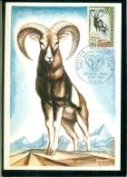 CM-Carte Maximum Card # France-1969 # WWF-Protection De La Nature # Animals,Tiere,Animaux # Mouflon # Paris - Cartes-Maximum