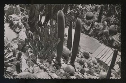 *Monte-Carlo. Le Jardin Exotique* Ed. Rella Nº 2889. Circulada 1967. - Jardín Exótico