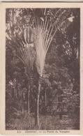 CONAKRY  La Plante Du Voyeur - Equatorial Guinea