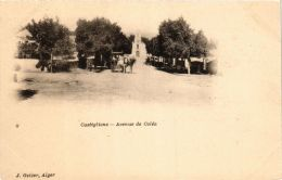 CPA Geiser 8 Castiglione Avenue D Coléa ALGERIE (757571) - Other Cities
