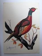 OISEAUX - Coq Faisan - Oiseaux