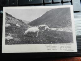 19544) FRASE ALEARDI L'ORA CHE IL TREMOLO ...PECORE AL PASCOLO VIAGGIATA 1912 - Filosofia & Pensatori