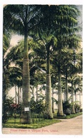 C-R-6  LIMON : Royal Palms In Vargas Park - Costa Rica
