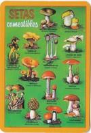 Calendrier Plastifié, Thème Champignon  Mushroom  Cogumelo  Setas - Advertising
