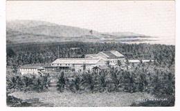 JAM-13   GRAY'S INN Factory ( Sugar Factory) - Jamaica