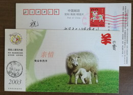 Honorable Zodiac Sign,Family Affection,Ewes Feeding,CN 03 Shangrao Lunar New Year Of Sheep Year Advert Pre-stamped Card - Chinese New Year