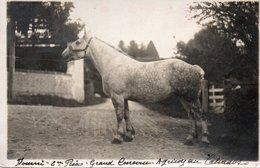 """Carte Photo GRANDOUET  (c De Cambremer) 14 Calvados.Cheval Primé  """"Grand Concours Agricole Du Calvados """" Recto Verso - France"""