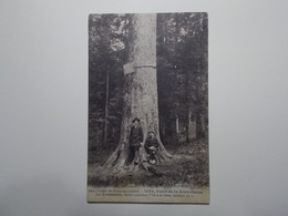 Carte Postale - Forêt De La Joux - Le Président - Sapin Mesurant 52 M (2494) - France