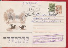 BIRD BIRDS BLACKCOCK MOUNTAIN ROOSTER RUSSIA COVER STATIONERY, ENTIER POSTAL - Coucous, Touracos