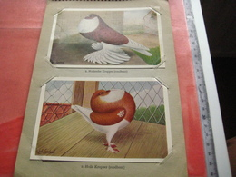 Full Set Complete 24 Cards TAUBEN Duiven Pigeons - 2 ALBUMS Conserven Fabriek TAMINIAUX - ELST Hollandse Tuimelaar E.a. - Unclassified