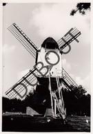 Overpelt Molen/Moulin Originele Foto  C1 - Overpelt