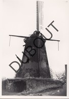 Ophoven Molen/Moulin Originele Foto  C5 - Kinrooi