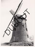 Overpelt Molen/Moulin Originele Foto  C7 - Overpelt