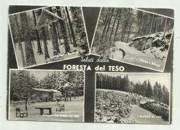 SALUTI DALLA FORESTA DEL TESO - NV FG - Pistoia