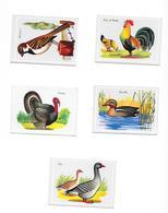 IMAGE BON POINT - OISEAUX - Vieux Papiers