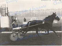 Photographie Cheval Compétition De Sulky Hippodrome De Kuurne 1973 - Sport