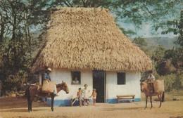 BOHIO TIPICO EN UNA ALDEA DE LA MONTAÑA DEL INTERIOR DE PANAMA. CROCKER CO. CIRCULEE 1955 TO CHILE - BLEUP - Panama