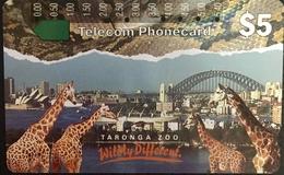 Paco \ AUSTRALIA \ AUS-M-025 \ Giraffes - Animali Zoo \ Usata - Australië