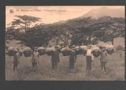 Philippines - Missiën Van Scheut - Philippijnen - Rijstoogst / Rice Harvest - Philippines