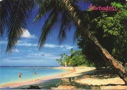 CPSM LES BARBADES  Plage De Sable Fin - Antigua & Barbuda