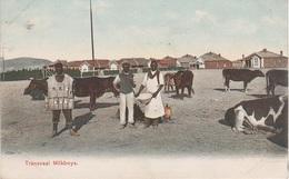 CPA - AK Transvaal Milkboys A Pretoria Südafrikanische Republik Kolonie Colony ZAR Südafrika Afrique De Sud South Africa - South Africa