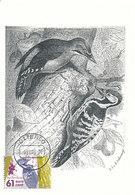 D35213 CARTE MAXIMUM CARD FD 2004 NETHERLANDS - WOODPECKER - DRAWING CP ORIGINAL - Climbing Birds