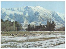 (789) New Zealand - Three Springs - Cloudy Range - Mackenzie Country - New Zealand