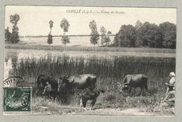 37 - Indre Et Loire - Luzillé - Etang De Brosse - France