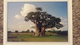 CPM BAOBAB CAVERNE PHOTO WAKHATILENE AFRIQUE  ? - Trees