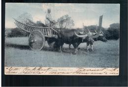 BURMA/ MYANMAR Burmese Buffalo Cart Ca 1910 OLD POSTCARD 2 Scans - Myanmar (Burma)