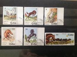 Cuba - Complete Set Paarden 1981 - Gebruikt