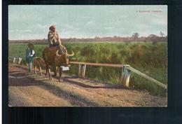 BURMA/ MYANMAR A Burmese Farmer Ca 1910 OLD POSTCARD 2 Scans - Myanmar (Burma)