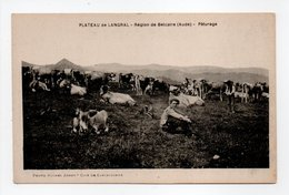 - CPA PLATEAU DE LANGRAL (11) - Région De Belcaire - Pâturage (avec Vaches) - Photo Michel JORDY - - Ohne Zuordnung