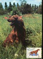 39460 Russia , Maximum 1972,  Dog,  Hund,  Chien - Dogs