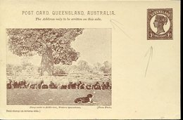 39473 (australia)queensland Post Card Stationery 1d.showing Sheep Dog Under A Bottle-tree,western Queensland RR - Ganzsachen