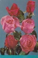 ROSAS ROSES BOUQUET RAMO FLOWERS FLEURES.CIRCULEE ARGENTINE 1977- BLEUP - Bloemen