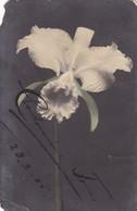 ORQUIDEA ORCHIDEE COLORISE. CIRCULEE ARGENTINE 1905- BLEUP - Bloemen