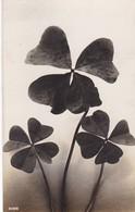 TREBOL CUATRO HOJAS FOUR LEAF CLOVER TREFLE A QUATRE FEUILLES. CIRCULEE VERSAILLES 1932 TIMBRE ARRANCHE- BLEUP - Bloemen, Planten & Bomen