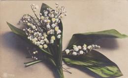 LIRIO DE LOS VALLES LILY OF THE VALLEY LIS DES VALLEES CONVALLARIA MAJALIS COLORISE. NPG.CIRCA 1900s UNCIRCULATED- BLEUP - Bloemen