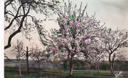CERCIS CANADENSIS, FOTOCOLOR. COLORISE.CIRCA 1900s UNCIRCULATED- BLEUP - Bomen