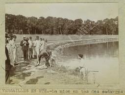 Hécatombe De Poissons à La Pièce D'eau Des Suisses Du Château De Versailles En été. 3 Citrates Vers 1900. Pêche. - Lieux