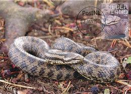 D35555 CARTE MAXIMUM CARD FD 2018 NETHERLANDS - CORONELLA SMOOTH SNAKE CP ORIGINAL - Slangen