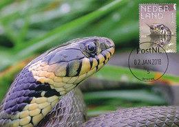 D35556 CARTE MAXIMUM CARD FD 2018 NETHERLANDS - NATRIX GRASS SNAKE CP ORIGINAL - Snakes