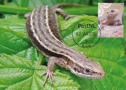 D35558 CARTE MAXIMUM CARD FD 2018 NETHERLANDS - ZOOTOCA VIVIPAROUS LIZARD CP ORIGINAL - Reptielen & Amfibieën