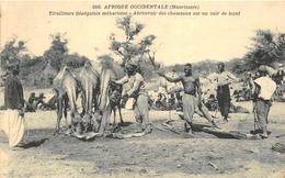 AFRIQUE OCCIDENTALE  -  MAURITANIE  -  Tirailleurs Sénégalais Méharistes - Abreuvoir Des Chameaux Sur Un Cuir De Boeuf - Mauritanie