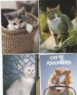 Lot De 36 Cartes -Thème ; Les Chats Et Chatons - Cats